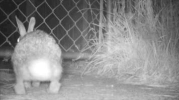 conejo deslizándose a través de la cerca