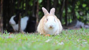Rabbit in the farm video