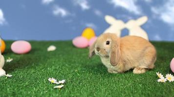 Rabbit in easter scene