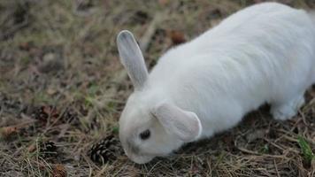 bambino che accarezza il coniglio