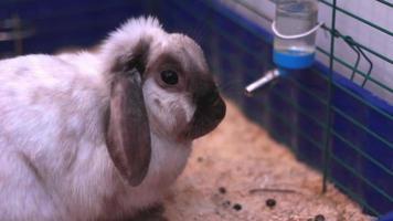 hermoso conejo en jaula video