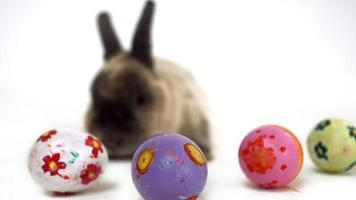 Easter bunny with colourful eggs video