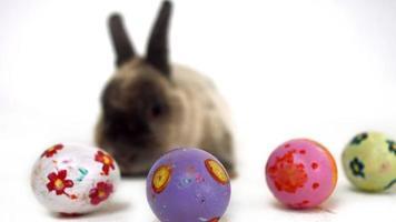paashaas met kleurrijke eieren video