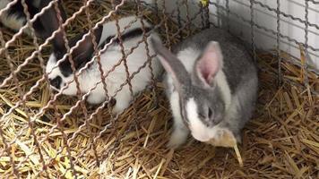 lindos conejitos en una jaula