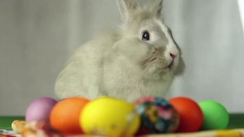 coniglietto di Pasqua con le uova di Pasqua