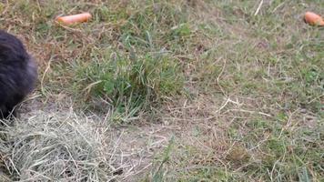lapins jouent dans le jardin dans le pré vert
