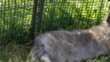 Rabbits play in the garden in green meadow video