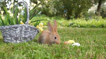 liten kanin som sitter i korgen
