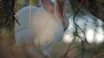 coniglio bianco in una foresta estiva