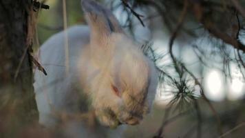 conejo blanco en un bosque de verano