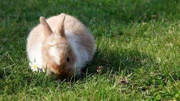 conejo de Pascua video