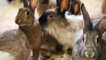 muchos conejos coloridos corriendo el zoológico de mascotas video