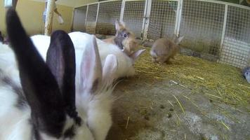 petite fille jouant avec des lapins
