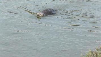 wilde Seeotterpflege