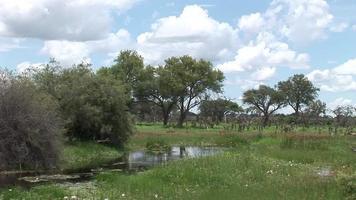 antilope selvaggia nella savana africana del botswana