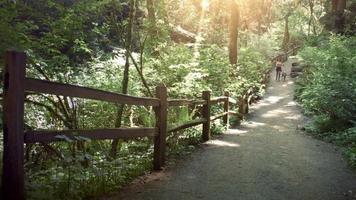 donna che cammina un cane nella foresta