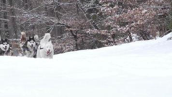 honden in winterlandschap