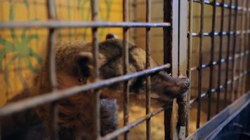 Animal shelter, raccoon, coati