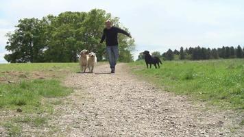 Tiro de cámara lenta de hombre haciendo ejercicio con perros en campo