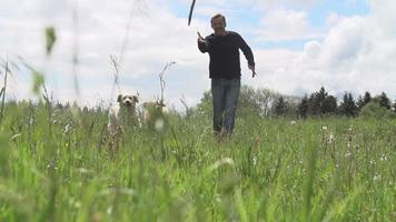 Tiro de cámara lenta de hombre haciendo ejercicio con perros en campo video