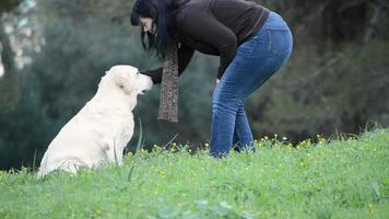 mulher indo para cachorro sênior - labrador - sentada na grama