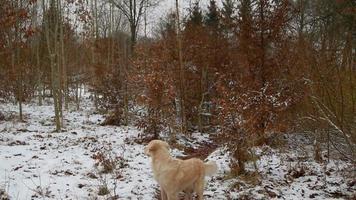 il cane sta camminando nella neve video