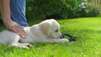 mulher está acariciando seu cachorro brincando