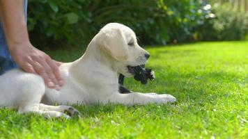 mulher está acariciando seu cachorro