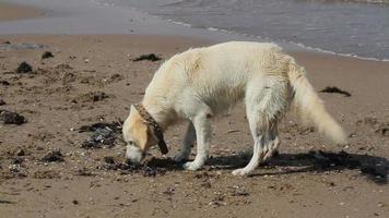 cane che gioca sulla spiaggia