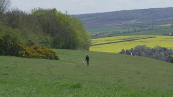 homem maduro leva cachorro para passear no campo, filmado em r3d video