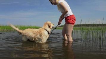Golden Retriever spielt auf dem Fluss.