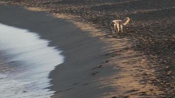 Happy dog playing on the seashore.