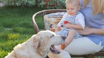 Mother and her son in the park with a golden retriever dog video