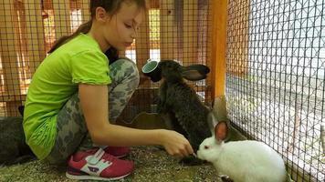 Niña alimentando conejos decorativos y se comunica con ellos imágenes de archivo video