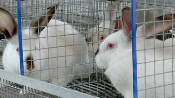 conejos en la granja en la jaula 5 video