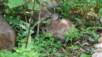 Cute small rabbit feeding in the garden video