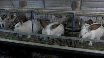 lapins à la ferme en cage 3