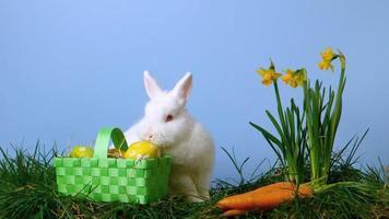 coniglio che annusa le uova di Pasqua in un cestino oltre ai narcisi