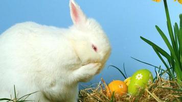 konijn krabt zijn neus met kleine paaseieren