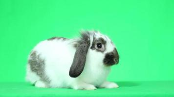 Bunny looking
