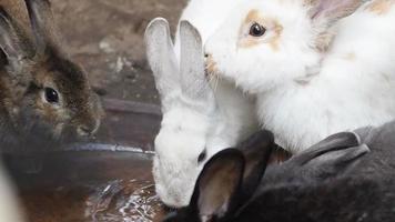 Cute white rabbits, HD Clip