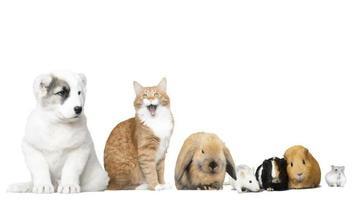 animais engraçados assistindo video