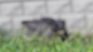 rabbit hiding in the grass video