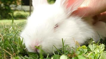soffice coniglio annusando, da vicino