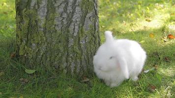 coniglio bianco al video all'aperto