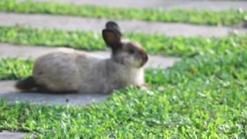 el conejo en el jardín