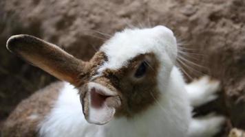 Breathing rhythm of the rabbit video