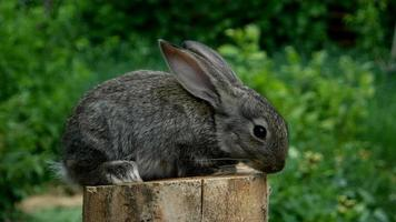lindo conejo bebé. alimentando animal