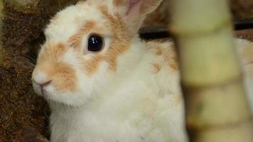 ritmo respiratorio del conejo video