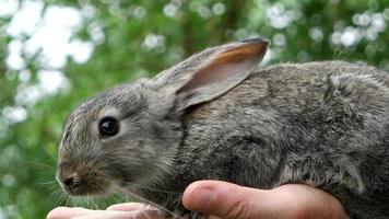 Conejo. animal en manos del hombre